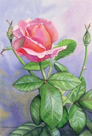 Beautiful Lady Rose.jpg